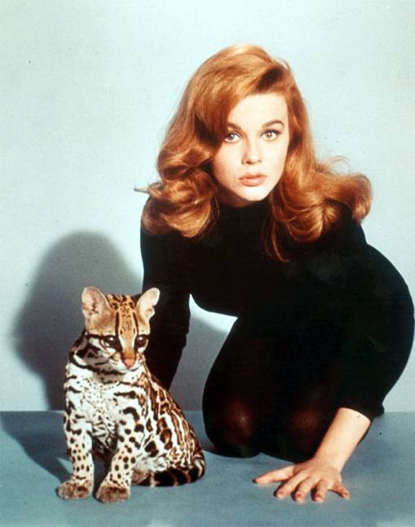Ann_Margret_kitten_leggings